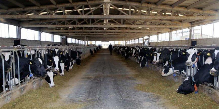 Tarım Bakanı Pakdemir'den hayvancılık desteği açıklaması