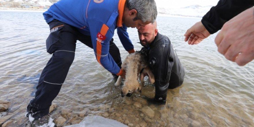 Donmak üzere olan köpeği buzları kırıp kurtardı