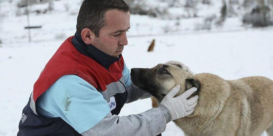 Ankara'da ekipler sokak hayvanlarını unutmadı