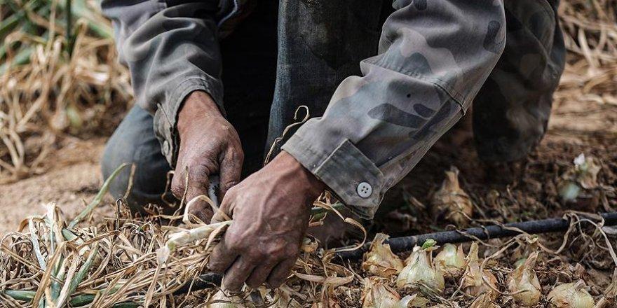 İsrail'de çalışan Taylandlı işçiler ölümle karşı karşıya
