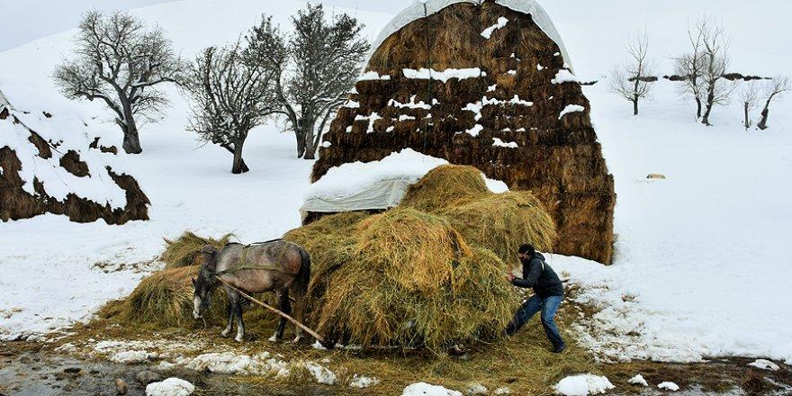 Dondurucu soğuklara aldırmadan hayvanlarını besliyorlar