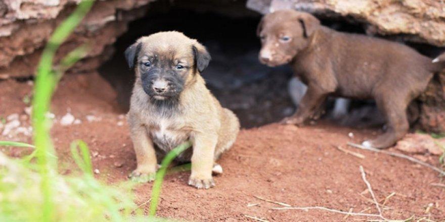 Osmaniye'de hayvanseverler yağmur altında kalan köpeklere sahip çıktı