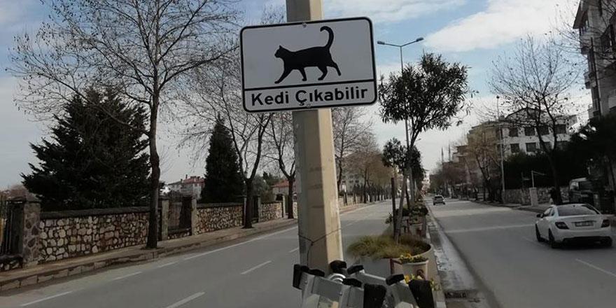 Yalova'da 'Kedi Çıkabilir' levhaları asıldı