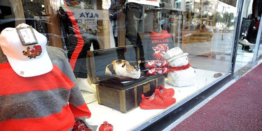 Üşüyen sokak kedileri mağaza vitrinlerinde ısınıyor