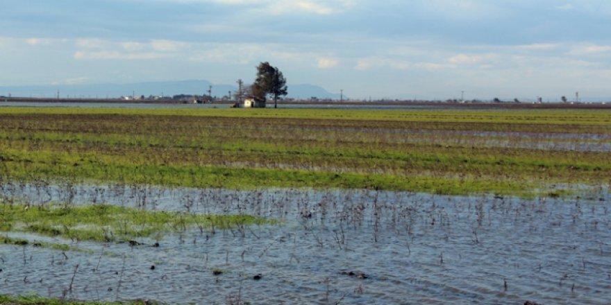 Hatay'daki yağışlarda on binlerce dekar tarım alanı hasar gördü