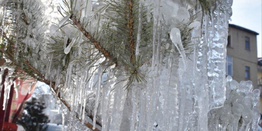 Sıfırın altında 28'i gören Kars'ta ağaçlar buz tuttu