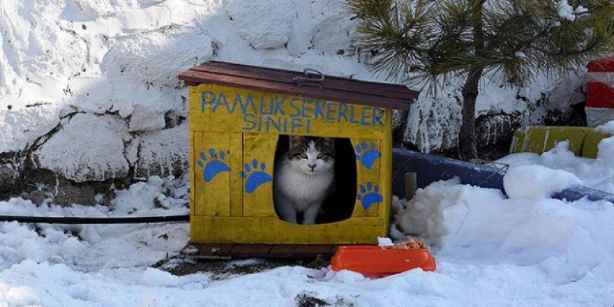 Seçim sandıklarından sokak kedilerine yuva yaptılar