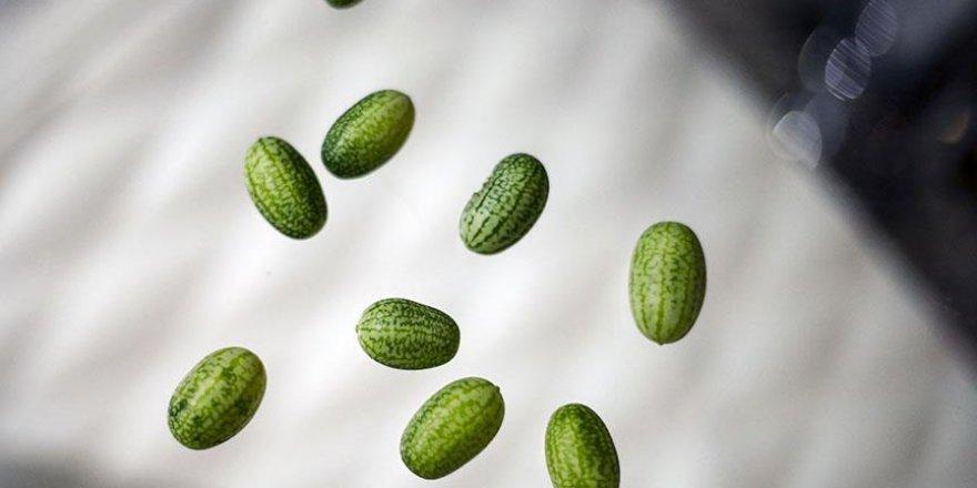 Türkiye'de zeytin büyüklüğünde karpuz üretildi
