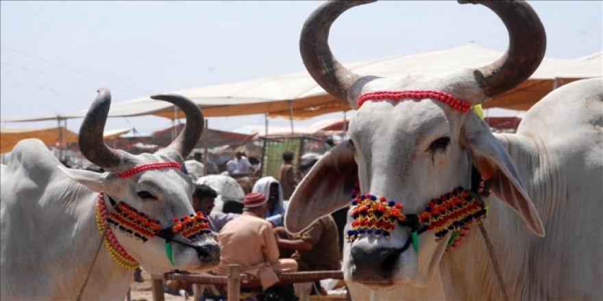 Hindistan'da kanlı boğa festivali