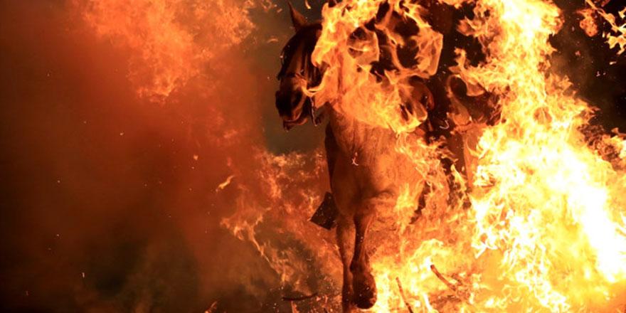 Ne biçim gelenek: Atları ateş üstünde yürütüyorlar