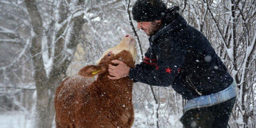 Üniversite öğrencisi hayvancılık yaparak masraflarını çıkarıyor