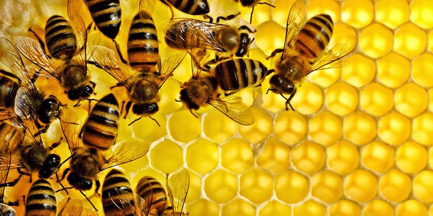 Eğitim verildi arılar matematik öğrendi
