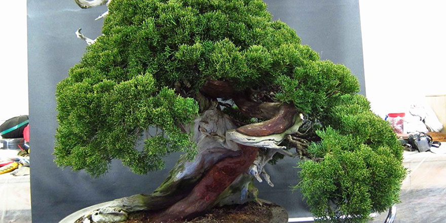 Japon çiftten ağaçlarını çalan hırsıza: Sulamayı unutma!
