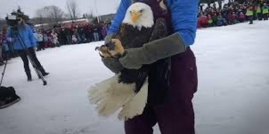 Kuyruğuna buz kütlesi yapışan kartalı yardımseverler kurtardı