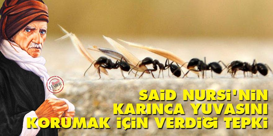 Said Nursi'nin karınca yuvasını korumak için verdiği tepki