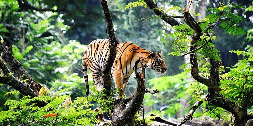 İnsanoğlu hem kendini hem bin 200 hayvan türünü yok ediyor