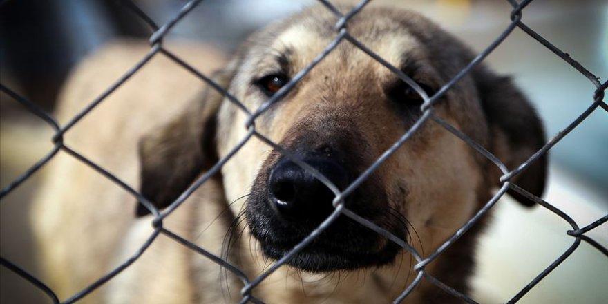 Tahran'dan bir şehirde daha köpek gezdirmek yasaklandı