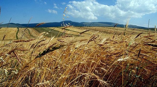 Türkiye ile Yemen arasında tarım alanında işbirliği