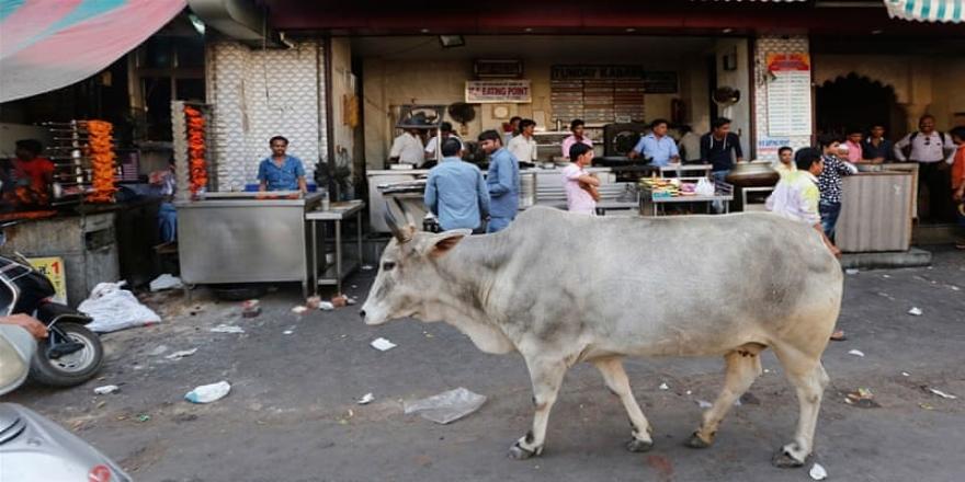 Hindistan'da inek eti taşıdığı iddiasıyla Müslüman genç linç edildi
