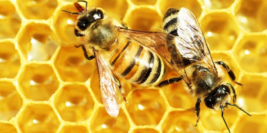 Arılar matematikten sonra yeni bir şey daha öğrendi