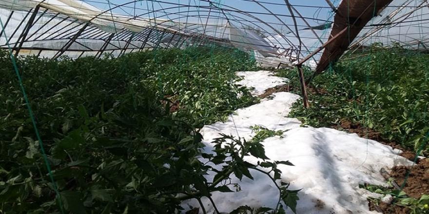 Antalya Serik'te dolu ile tarım alanları zarar gördü
