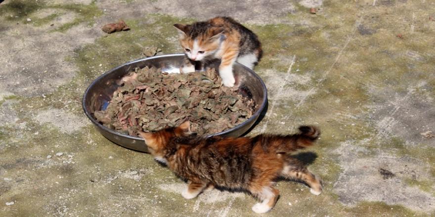 Edirne'de kedilere yarım ton ciğer dağıtıldı