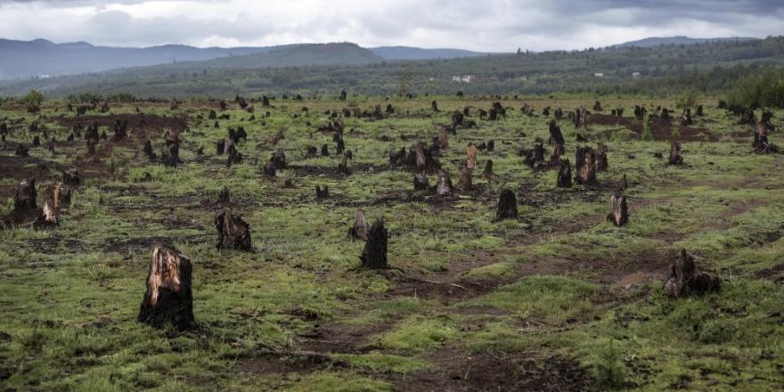 Dünyada 2018'de dakikada 30 futbol sahası büyüklüğünde ormanlık alan yok oldu