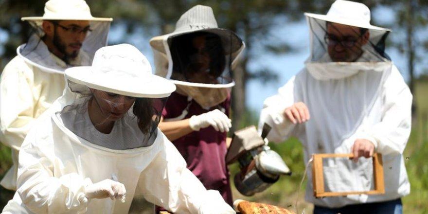 Arıcılar rotalarını arı zehrine çevirecek