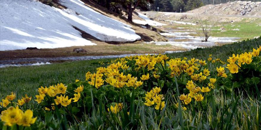 Allah'ın hikmeti: Kış ile bahar bir arada