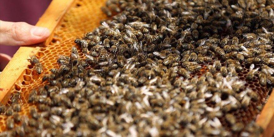 Arı ölümleri araştırılacak