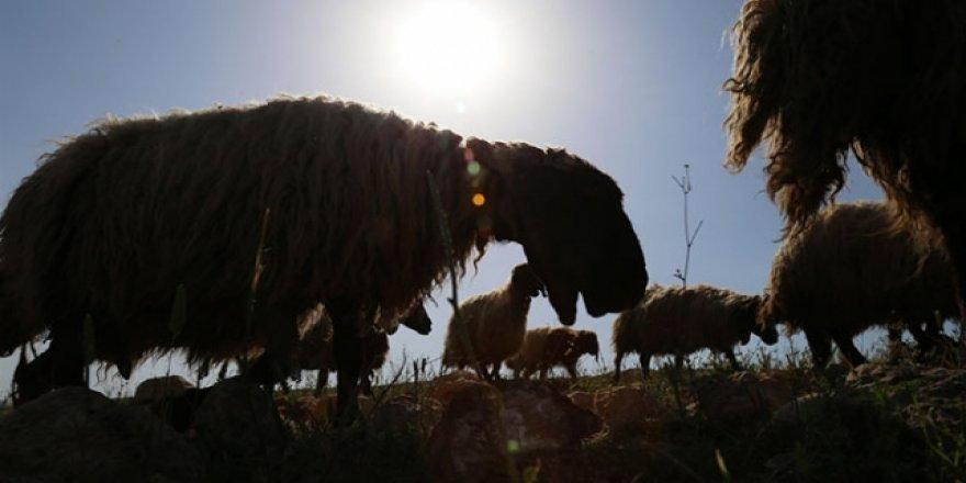 Göçerlerin ramazanda günler süren zorlu yolculuğu