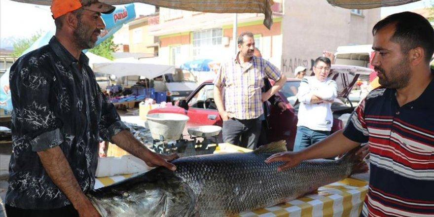 Karasu Nehri'nde 83 kilogram ağırlığında turna balığı yakalandı