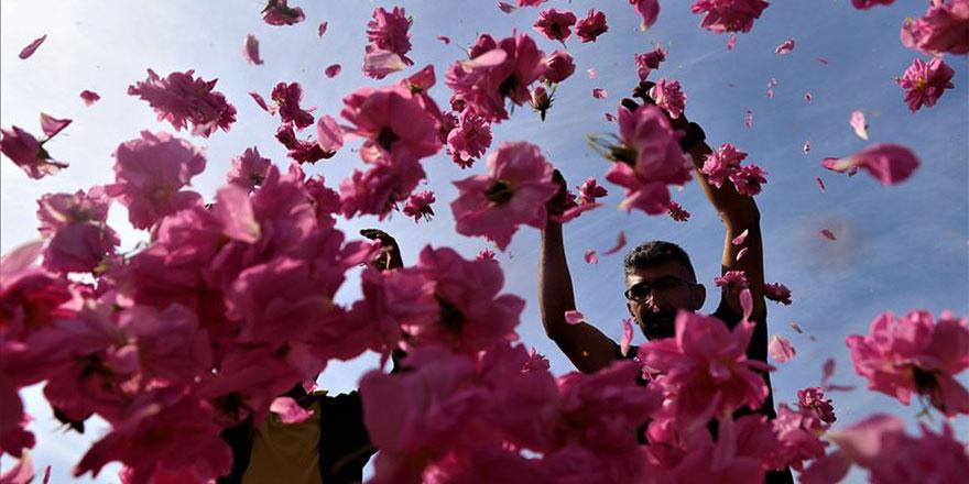 'Güller diyarı' Isparta'da hasat zamanı