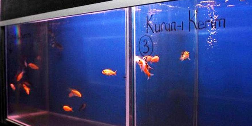Üniversite araştırdı: Kur'an dinletilen balıklar daha çabuk büyüdü