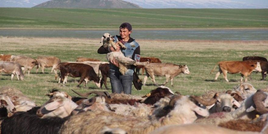 Çobanların ramazanda sürüleriyle zorlu yolculuğu