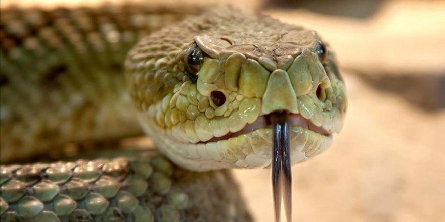 Yılanlar nedeniyle her gün 200 kişi ölüyor