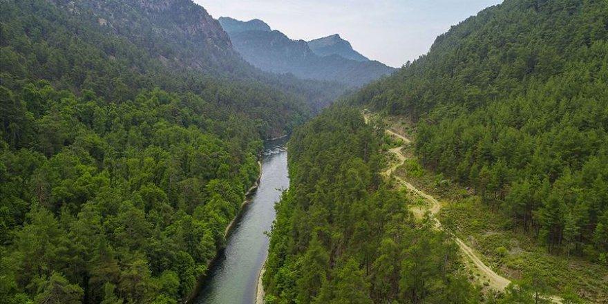 Sığlı Ormanları bilim insanlarının yeni gözdesi olabilir
