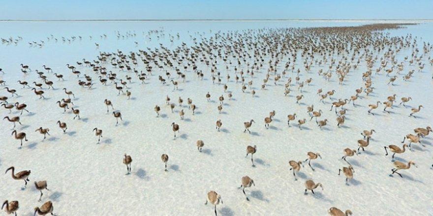 Tuz Gölü'ne flamingo akını