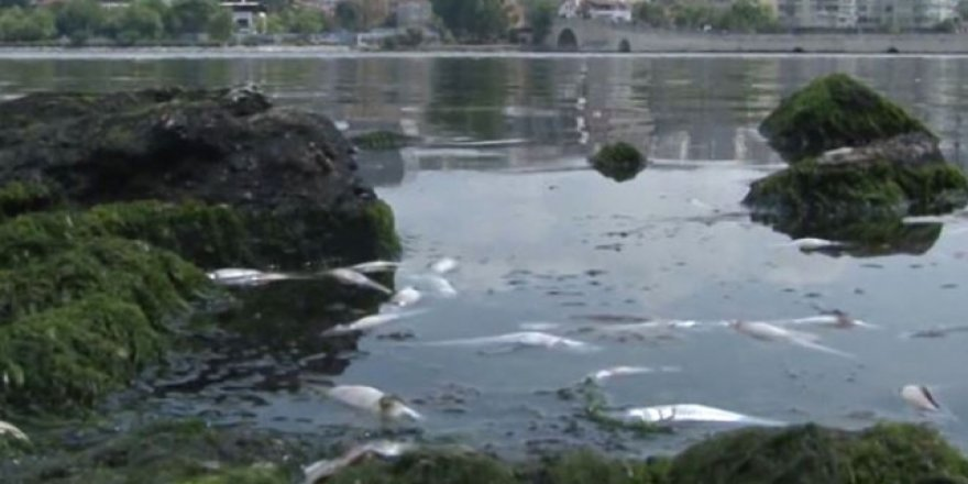 Küçükçekmece Gölü'nde binlerce balık kıyıya vurdu