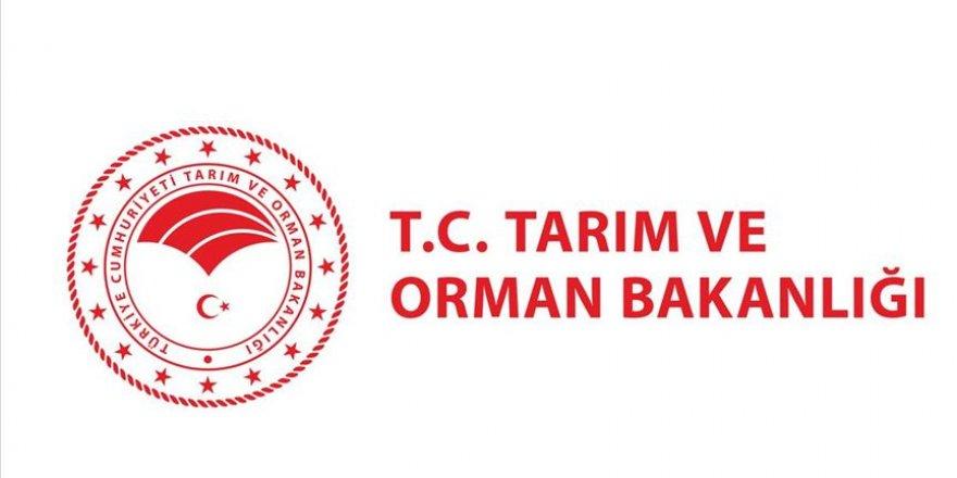 İstanbul'daki orman çalışmalarına ilişkin açıklama