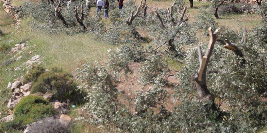İşgalci İsrail, Filistin topraklarında 2,5 milyon ağaç söktü