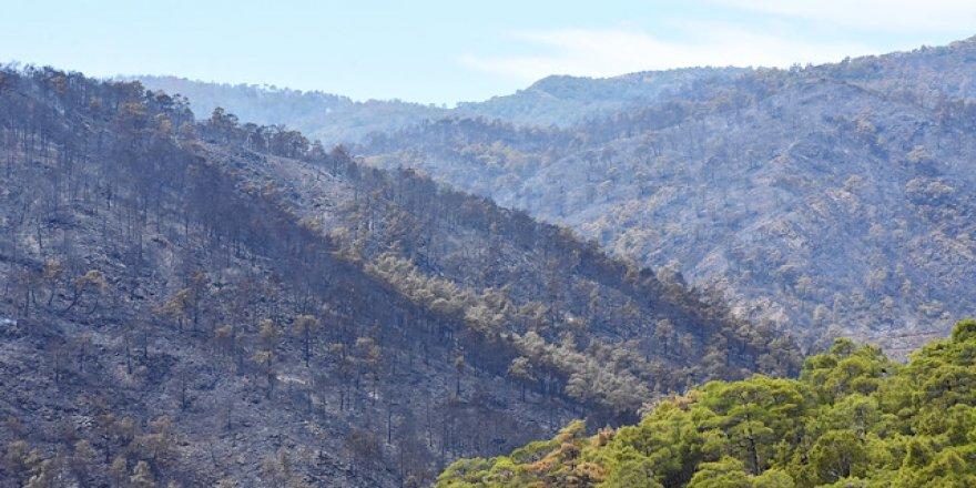 Muğla'da orman yangını nihayet söndürüldü