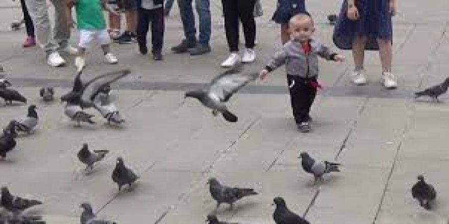 Düzce'de çocukların oyun arkadaşı güvercinler