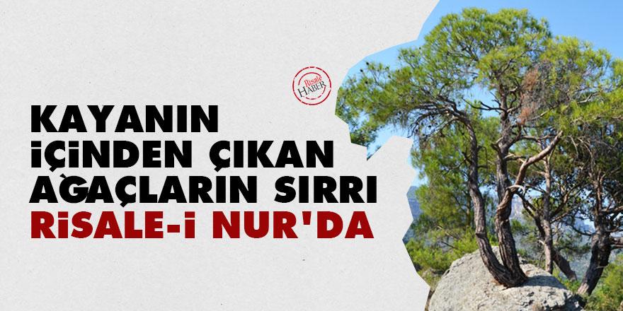 Kayanın içinden çıkan ağaçların sırrı Risale-i Nur'da