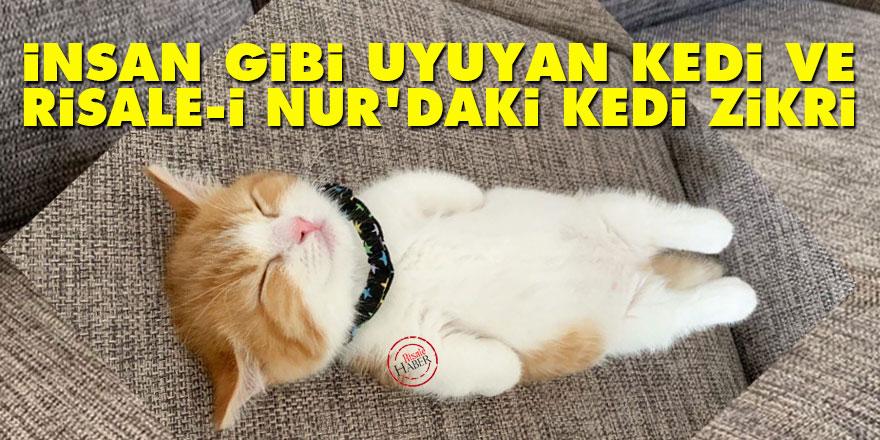 İnsan gibi uyuyan kedi ve Risale-i Nur'daki 'kedi' zikri