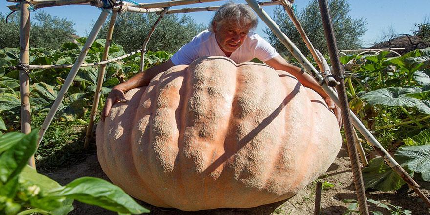 İspanyol çiftçinin tarlasında 215 kiloluk dev kabak yetişti