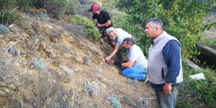 Bulunan fosiller İznik'in 300 milyon yıl evvel denizle kaplı olduğunu ortaya çıkardı