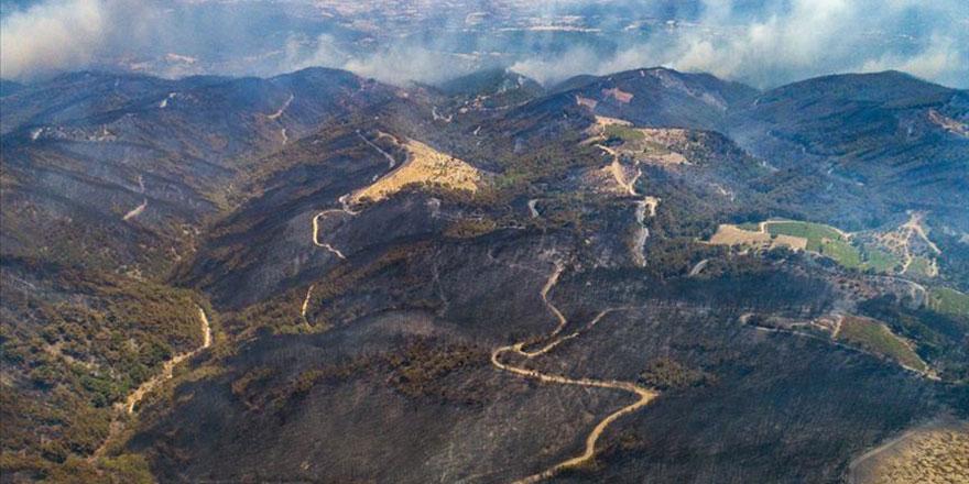 Yanan ormanın eski haline dönmesi için 30 yıl gerek