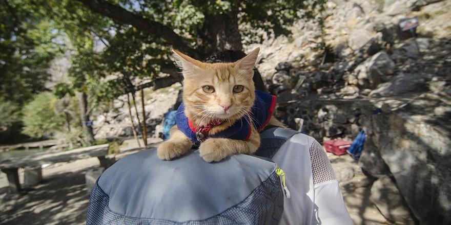 Sevimli kedi otostopla Türkiye'yi geziyor