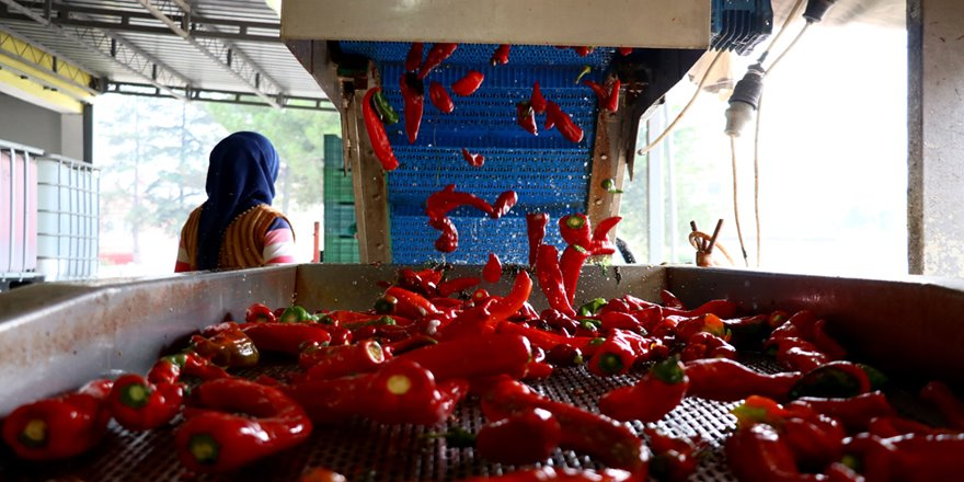 Kulaca'nın Hollanda'ya salça ihracatında 15 yılda 15 kat artış